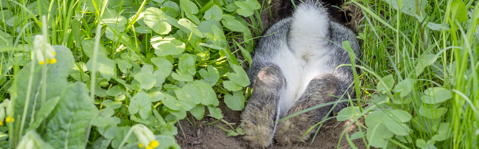 Rabbit in hole with fresh plants