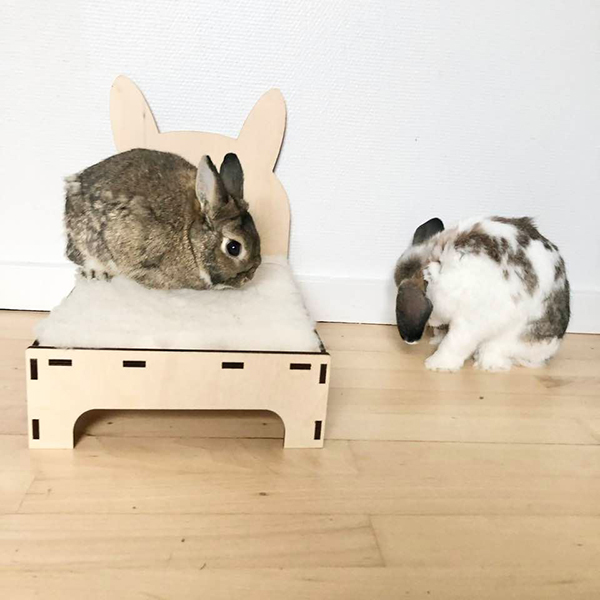 Nini rabbit sits on rabbit bed with ears