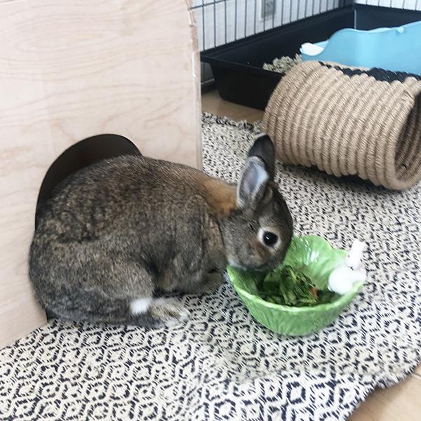 porcelain rabbit bowl with lettuce leaves