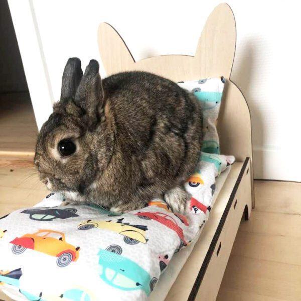 kanin på kaninseng