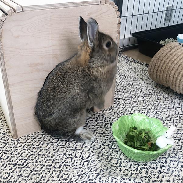 Nini with green feeding bowl with bunny