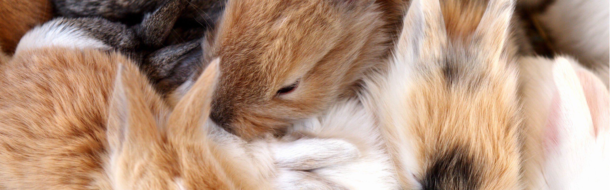 things you need for new rabbit