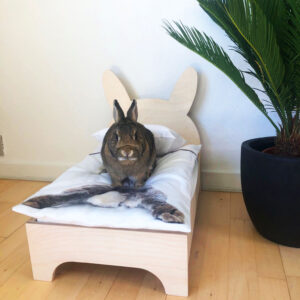 small image rabbit bed