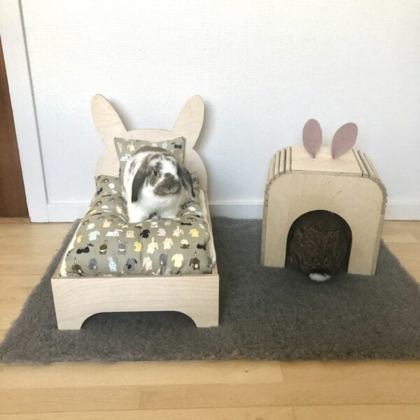 rabbit sits on rabbit bed with rabbit house and carpet for rabbits