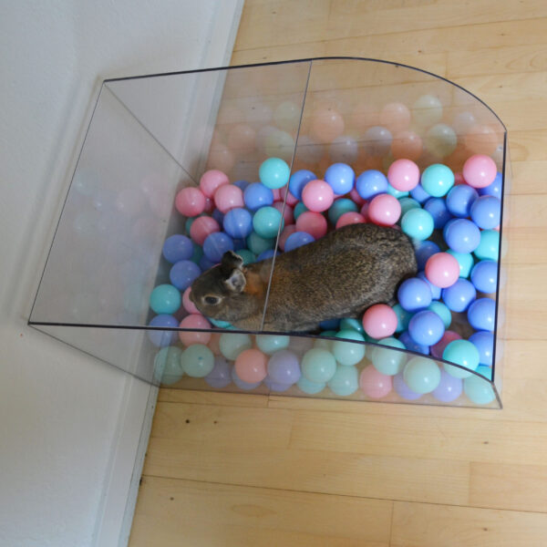 Rabbit plays in ball pit of shockproof acrylic