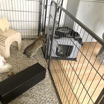blog Eddie rabbit arrives for bonding