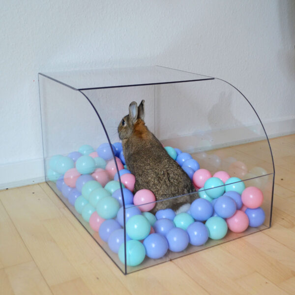 ball pool with rabbit playing