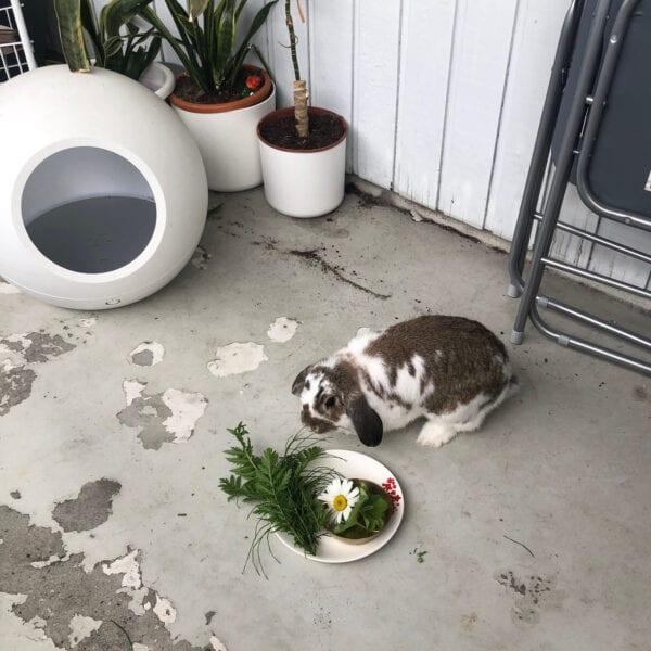 Eddie eats off plate