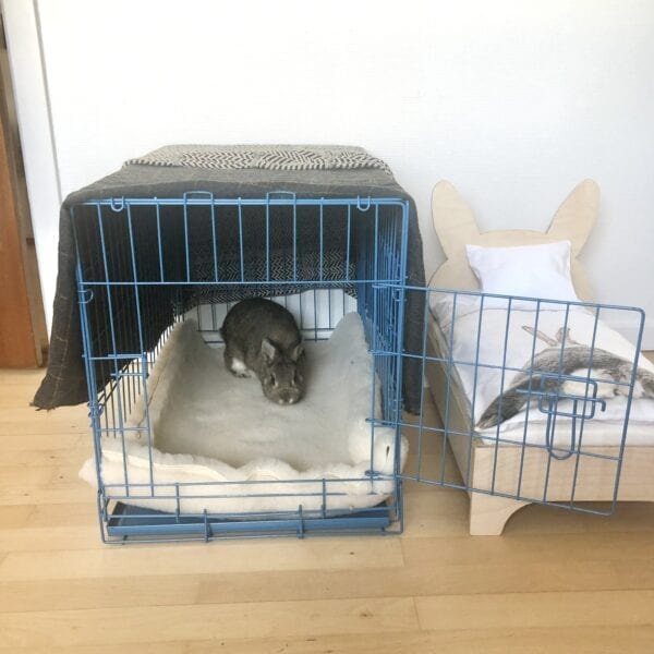 Rabbit in blue transport cage