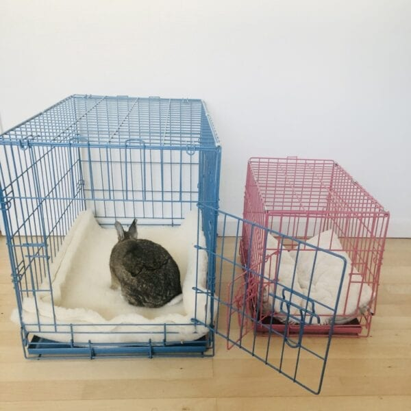 small and large transport cage