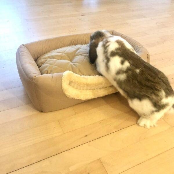 eddie rabbit on brown basket