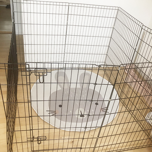 high cage and rabbit carpet
