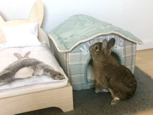 Rabbit stands outside rabbit cave