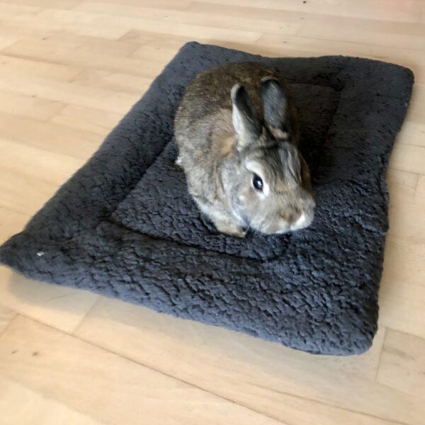 rabbit on gray soft cushion