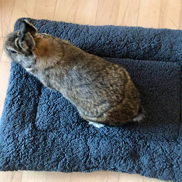 rabbit on gray soft pillow