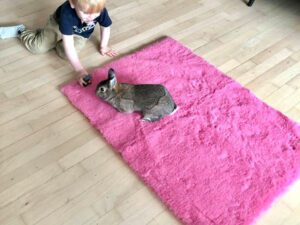 pink vetbed with rabbit and boy