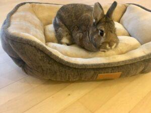 Nini rabbit in velvet canvas basket