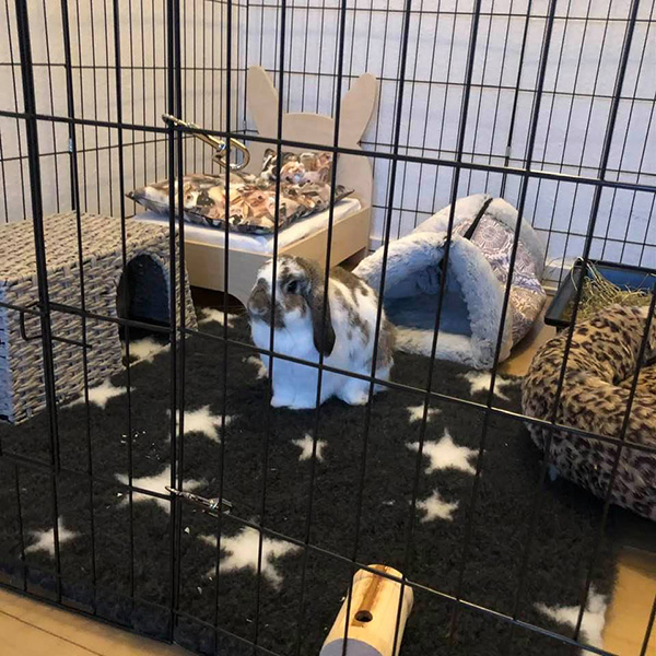 crackle cave for rabbits in the base