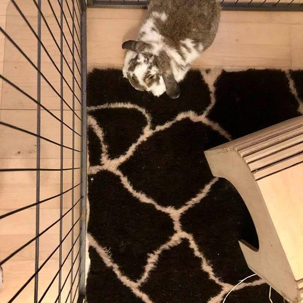 giraffe blanket with rabbit