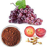 grape seed extrakt