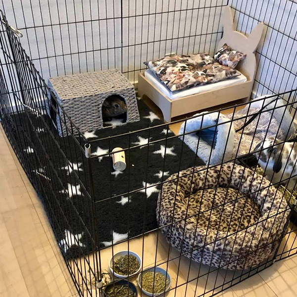 paper yarn house with rabbit in