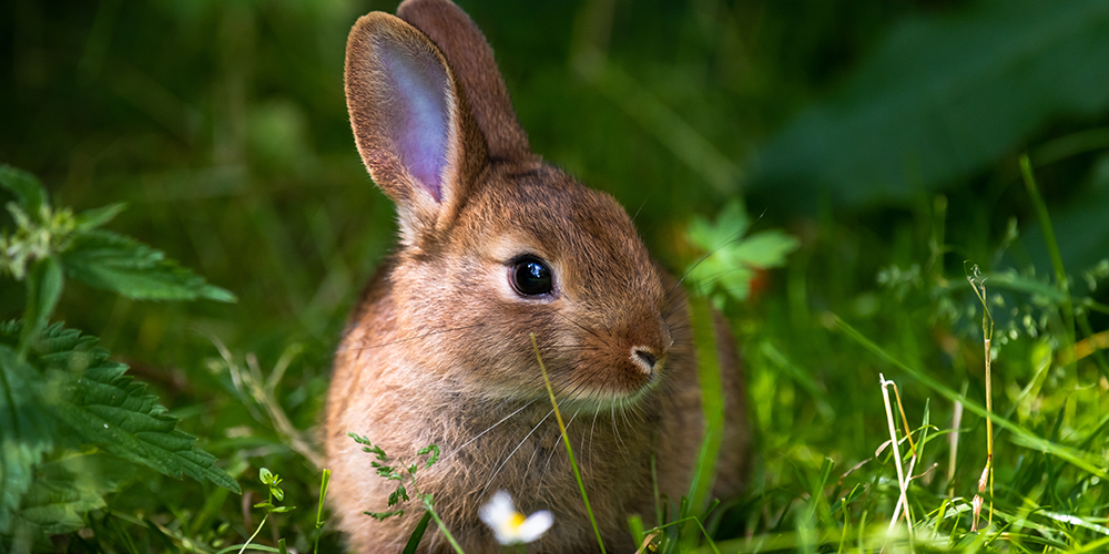 6 easy plants you can find for your rabbit in April