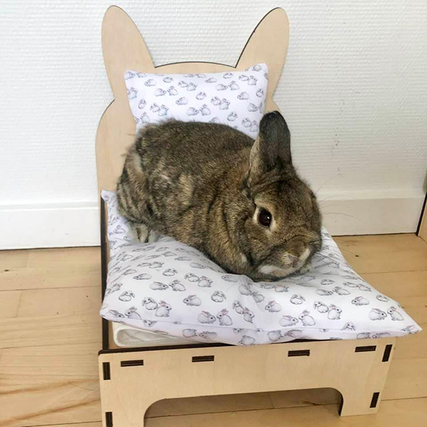 rabbit in bed with white rabbits