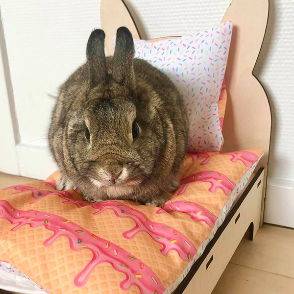 rabbit in bed with ice