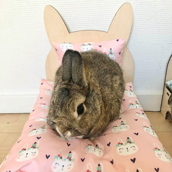 rabbit in bed with pink Indians
