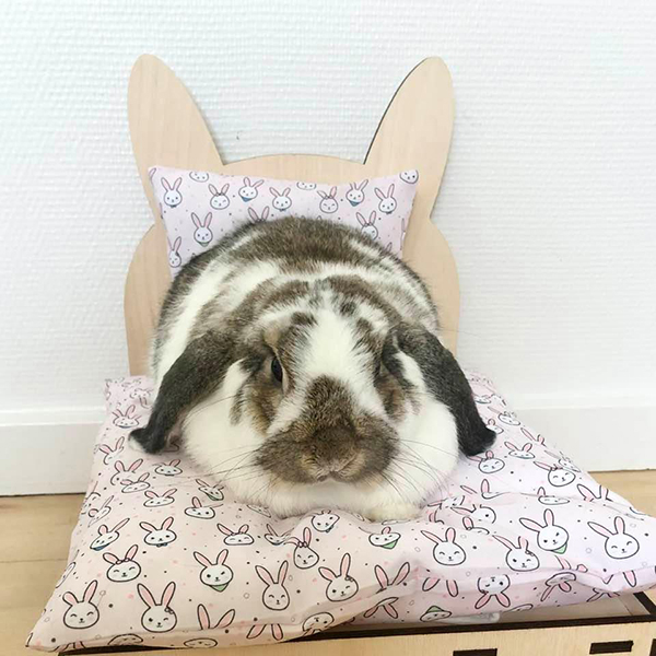 rabbit in bed with pink rabbits