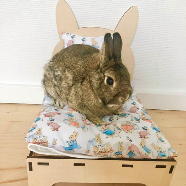 rabbit in bed with peter rabbit