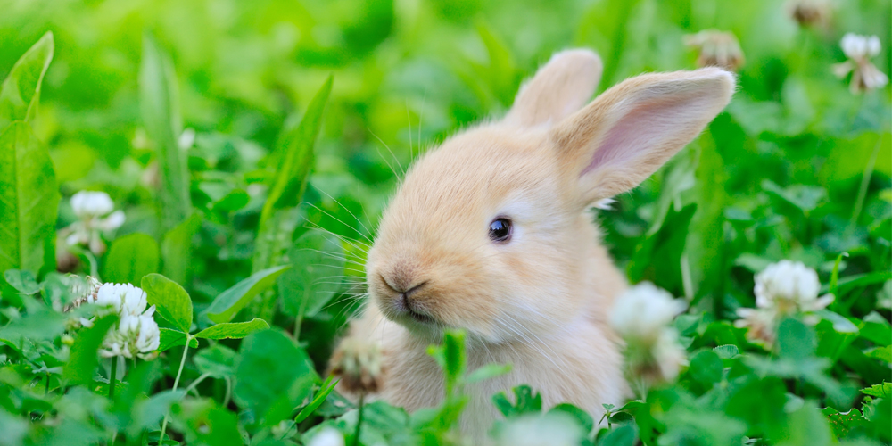 rabbit with greens