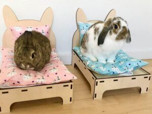 rabbits in two beds