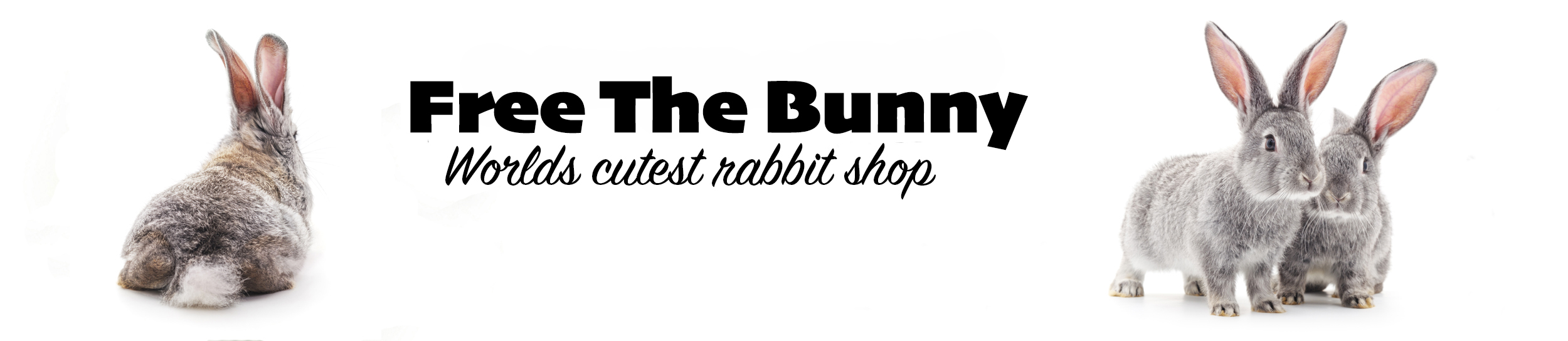 free the bunny worlds cutest rabbit shop
